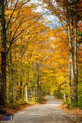 Autumn Voice