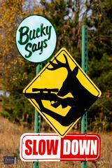 Bucky Says Slow Down