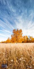 Frosty Fall Morning Sugar Maple
