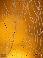 Golden Web