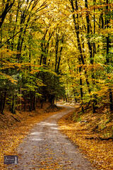 Leafy Backroad Curve