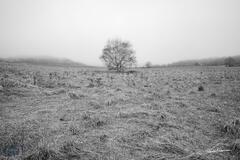 Lone Tree Grassland