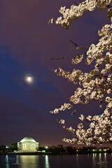Moon and Cherry Blossoms at the Jefferson Memorial