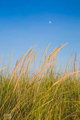 Moon over Dune Grasses