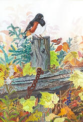 Old Fence Towhee