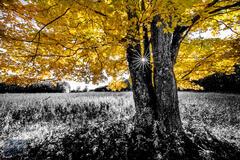 Aral Road, Benzie County, Esch Road, Michigan, Otter Creek Area, SLBE, Sleeping Bear Dunes National Lakeshore, autumn, fall