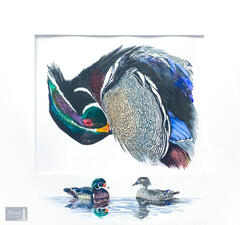 Preening Wood Duck with Embellished Mat