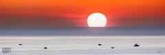 Salmon Stalker Summer Sunset