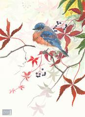 Virginia's Bluebird