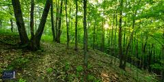 Wooded Hillside Trail
