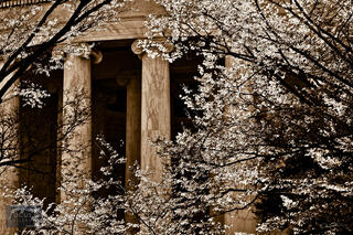 Jefferson Memorial Columns (Sepia)
