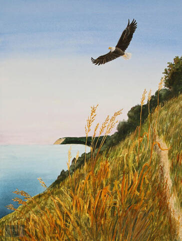 Original watercolor painting of a Bald Eagle soaring over the Empire Bluffs and Sleeping Bear Dunes in Michigan.