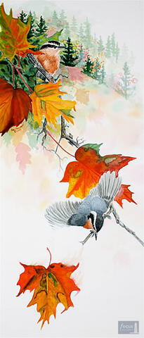 Original watercolor painting of a Red-breasted Nuthatch bird on a branch with fall color leaves.