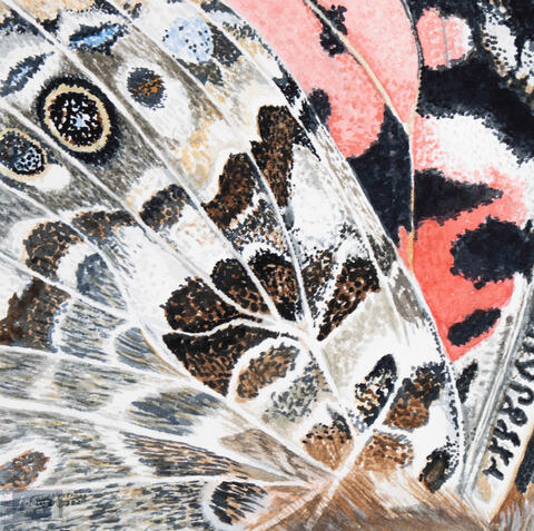 Original watercolor painting of the detail of the patterns on a Vanessa butterfly wing.