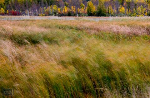 Arcadia Marsh Nature Preserve