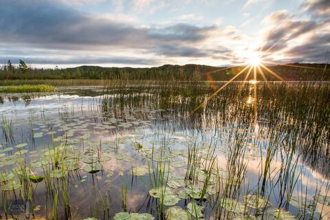Golden Days Loon Nature Sanctuary