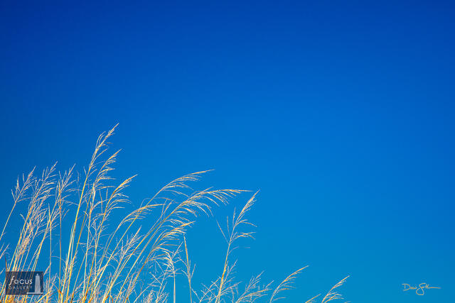 Blue Sky Day at the Dunes