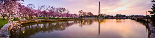 Cherry Blossom Sunrise