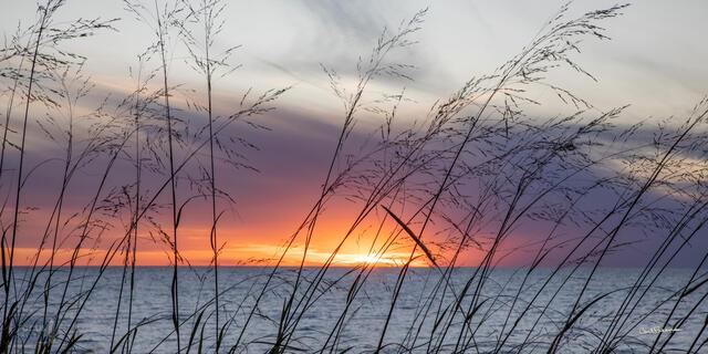 Dune Grass Sunset