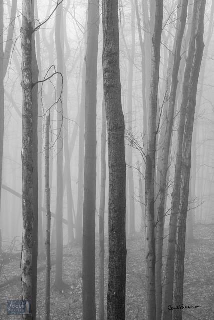 Foggy Trunks
