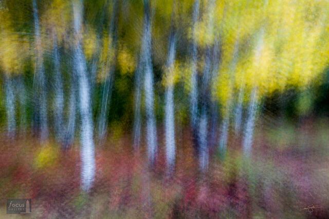 Impressionistic photograph of fall colors at Seven Bridges Nature Area, Kalkaska County, Michigan.
