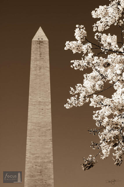 Monumental Cherry Blossoms