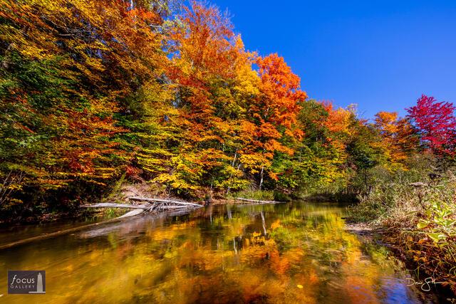 Peak Fall Colors along the Bestie River