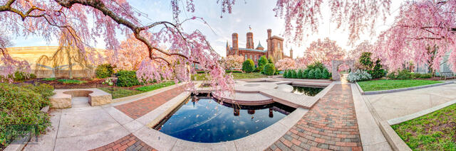 Spring at the Smithsonian Castle