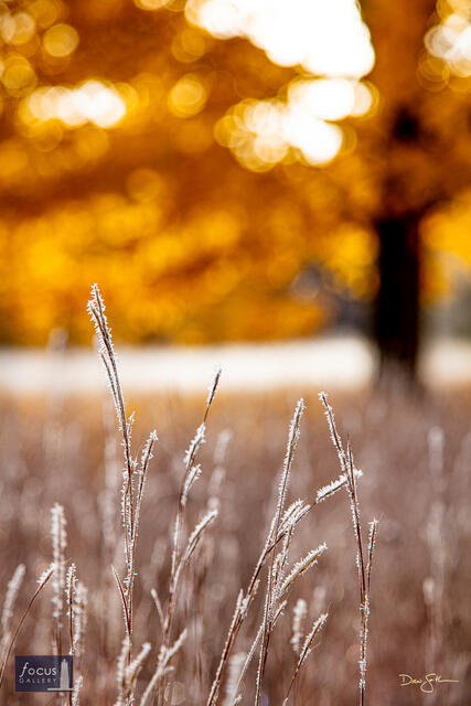 Warm and Cold - Frosty Grasses and Autumn Color