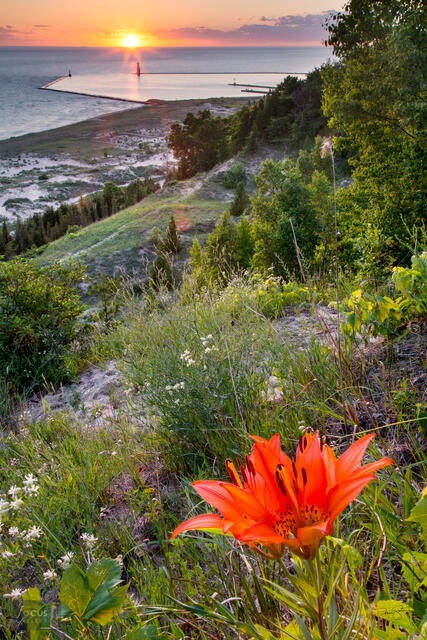 Wood lily blossom on a hillside overlooking sunset on Lake Michigan.