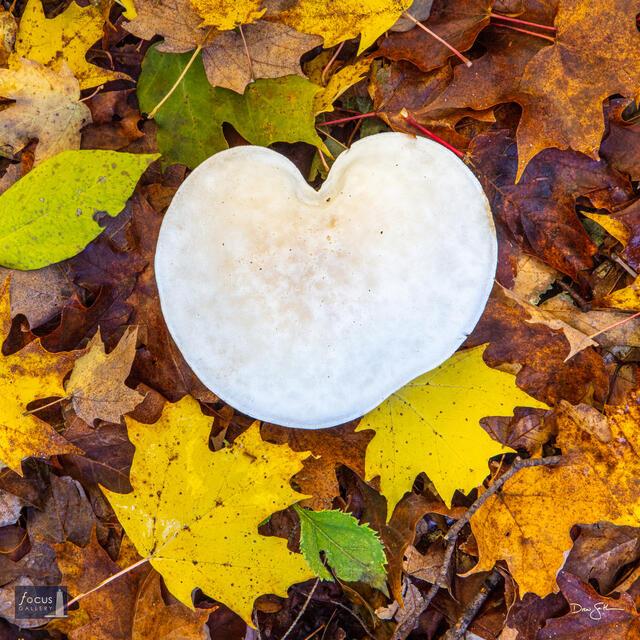 Autumn Love - Square Version