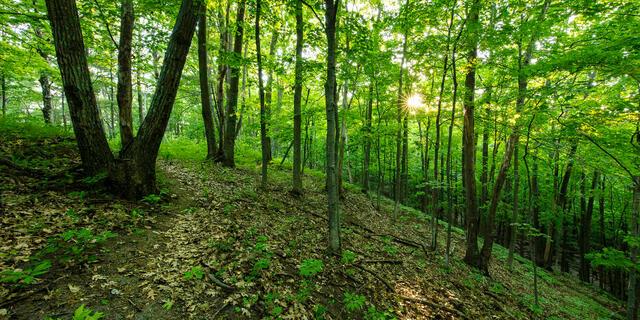 Benzie, Benzie County, GTRLC, Grand Traverse Regional Land Conservancy, Michigan, Mount Minnie, Mt. Minnie