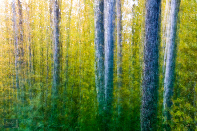 Impressionistic photograph of a forest scene.