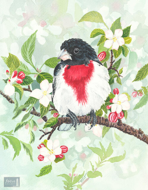 Original watercolor painting of a Rose-breasted Grosbeak bird surrounded by white blossoms.