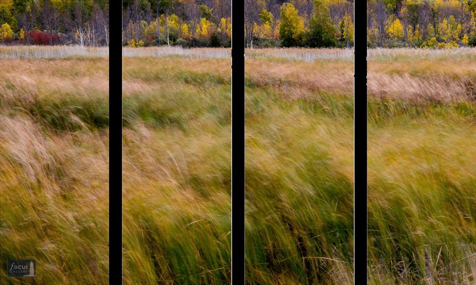 Winds blow through marsh grasses in autumn at Arcadia Marsh Nature Preserve, Arcadia, Michigan - four panel image.