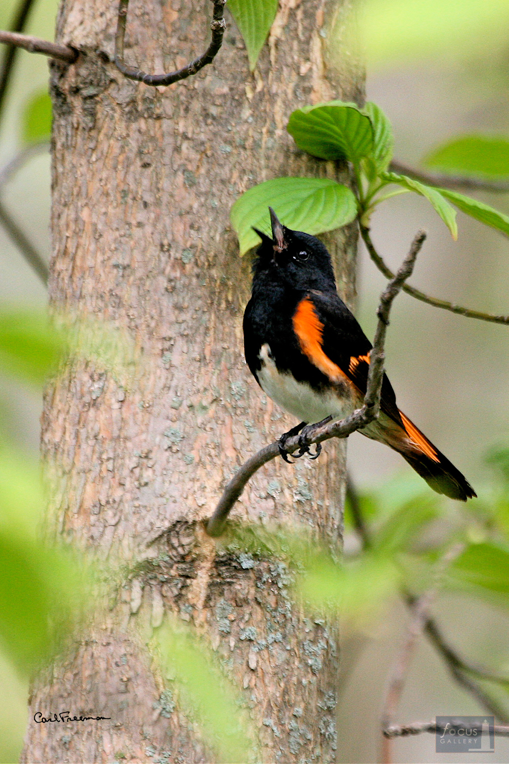 Photo © Carl Freeman This image was taken on land protected by the Grand Traverse Regional Land Conservancy (GTRLC). 5% of all...
