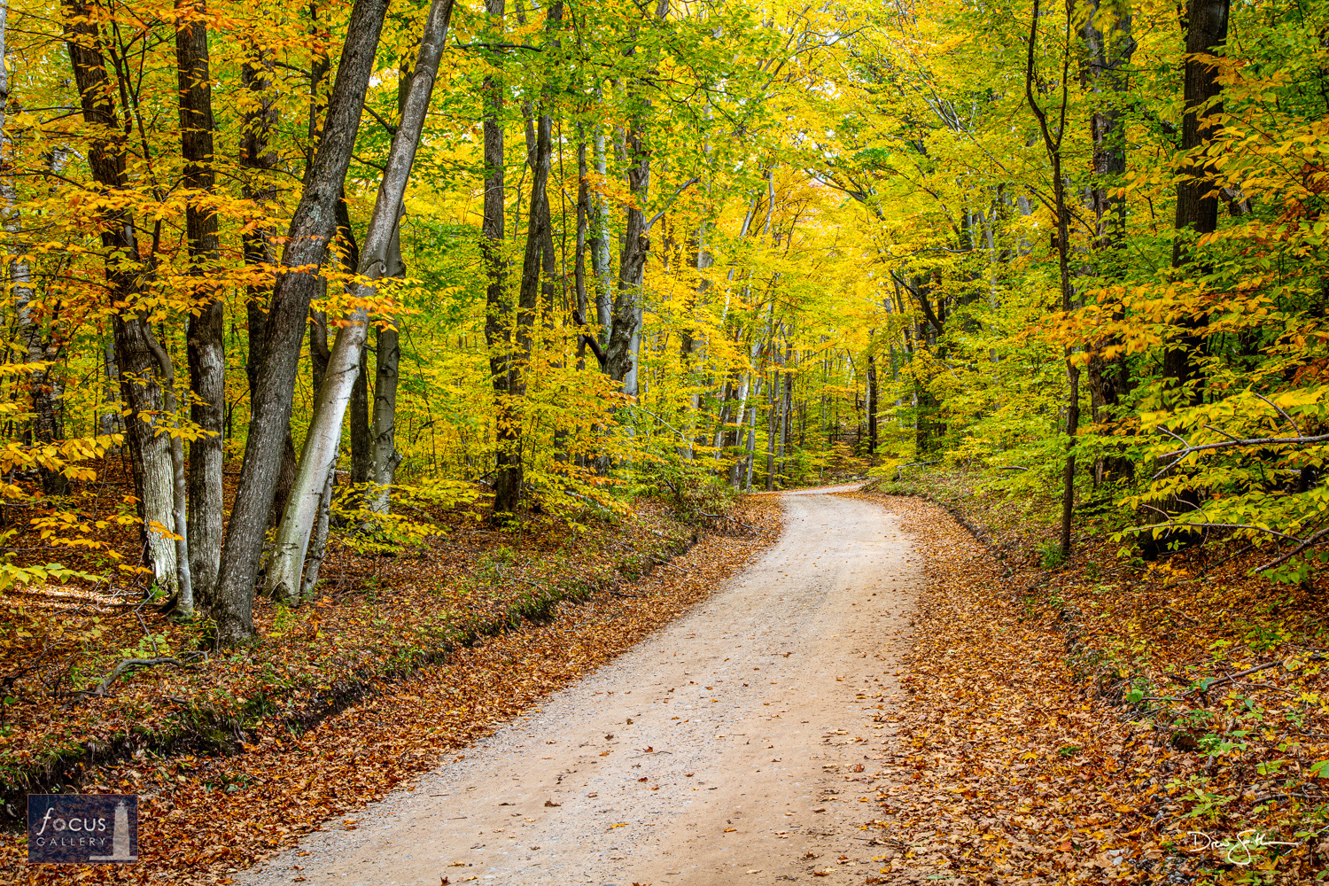 Photo © Drew Smith Color tunnel along one of many scenic backcountry roads through the Sleeping Bear Dunes National Lakeshore...