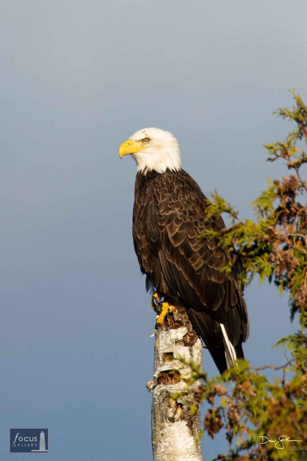 Photo © Drew Smith While driving down M-22 I came around a bend in the road and saw this beautiful Bald Eagle sitting perched...