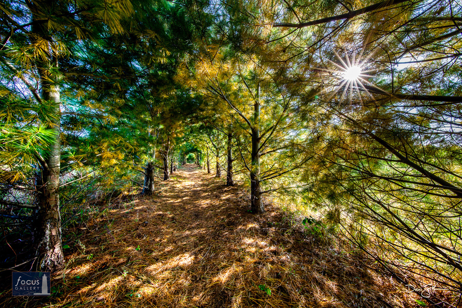 Photo © Drew Smith Located on private property near Frankfort, this tunnel of trees is a project more than 15 years in the making...