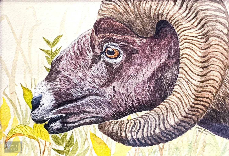 Original watercolor painting of a Bighorn Sheep head.