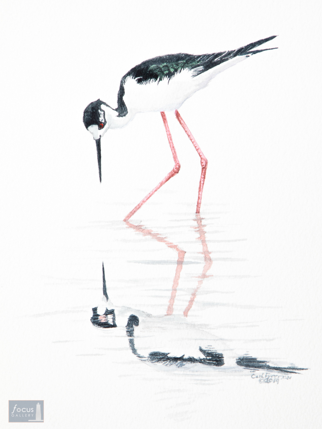 Original watercolor painting of a Black-necked Stilt Bird and its reflection.