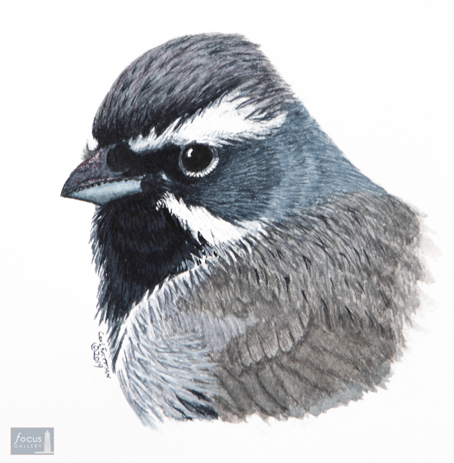 Original watercolor painting of the detail of a Black-throated Sparrow bird's head and feathers.