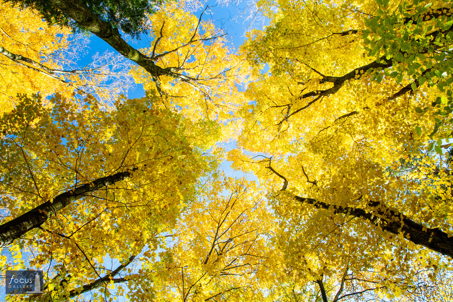 Photo © Drew Smith Blue skies poke through a canopy of fall color near Otter Creek in the Sleeping Bear Dunes National Lakeshore...
