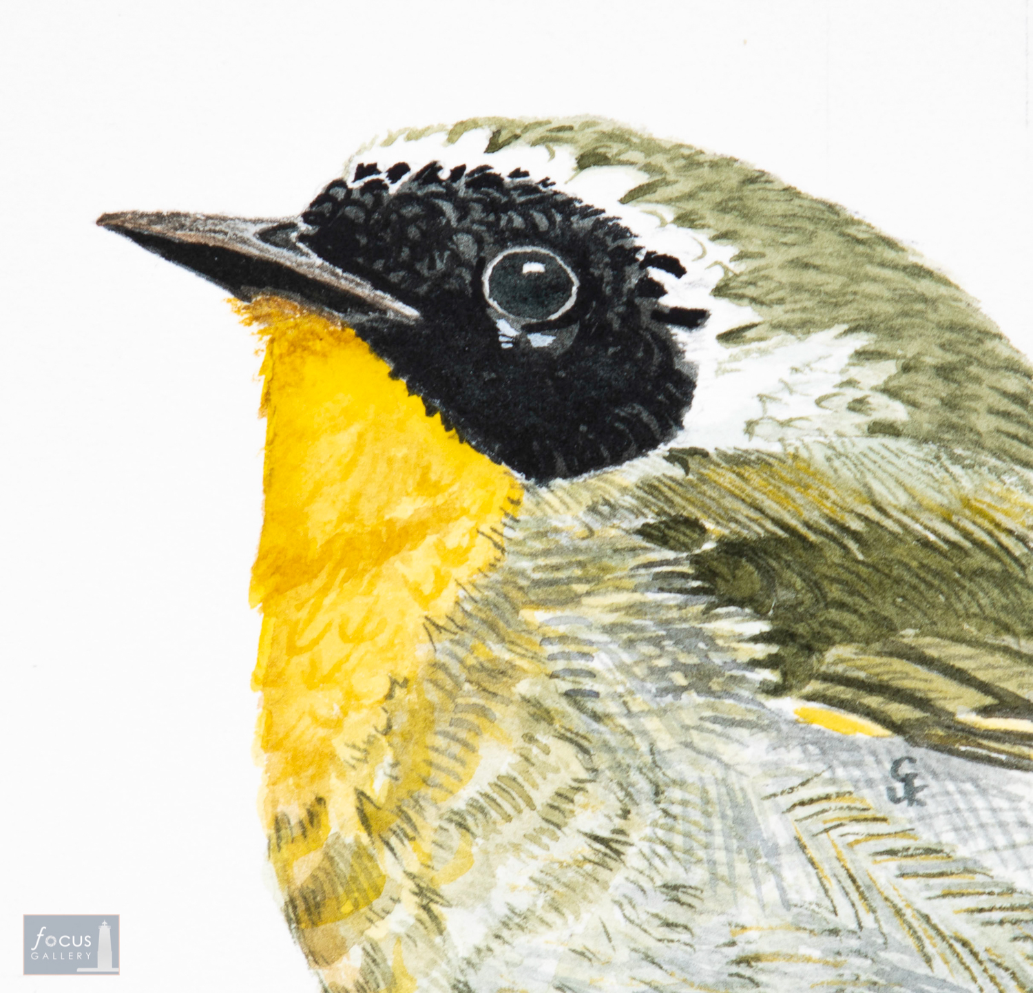Original watercolor painting of the detail of a Common Yellowthroat Warbler's head and feathers.