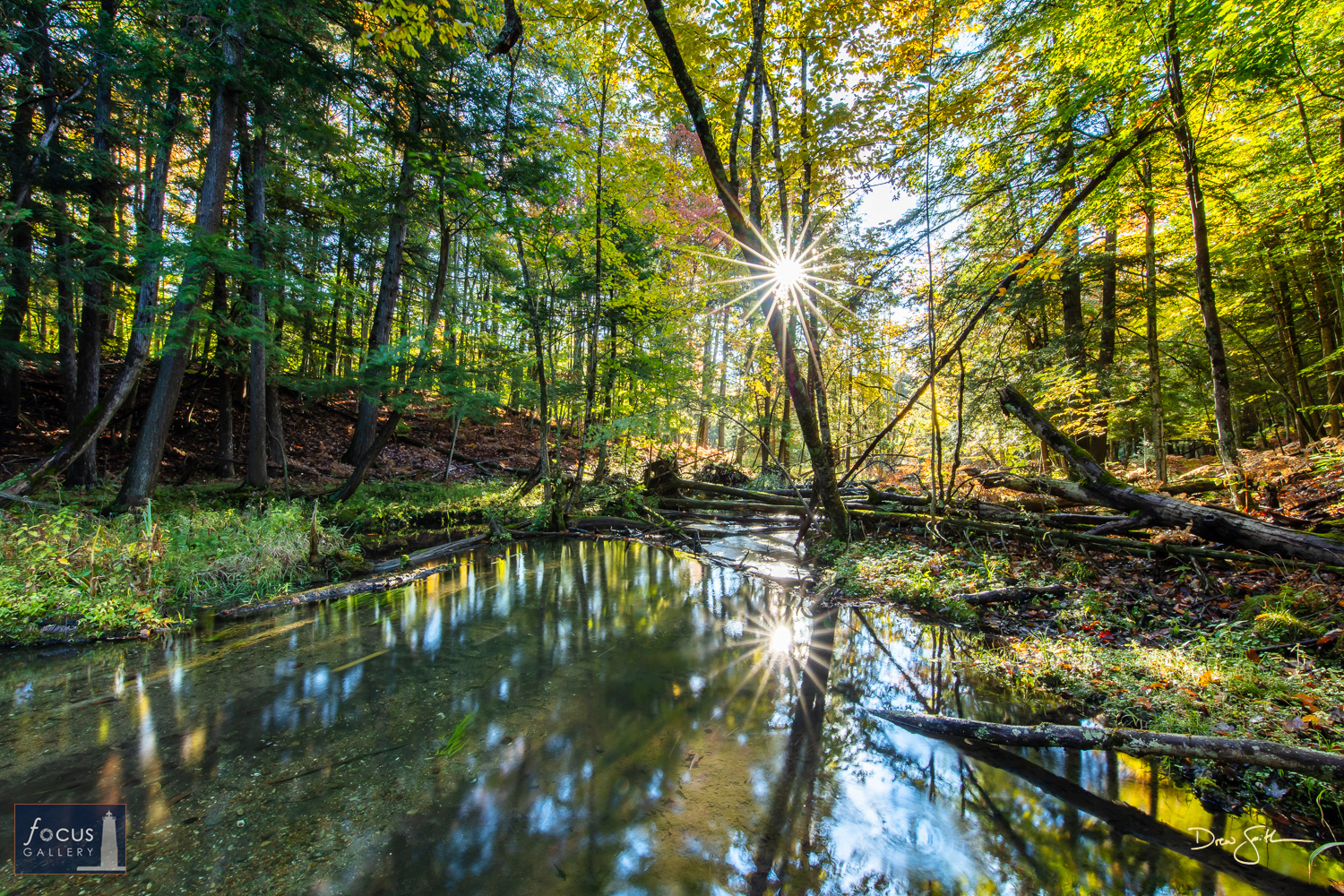Photo © Drew Smith The afternoon sun shines through the forest along the creek connecting the Platte River to Lower Woodcock...