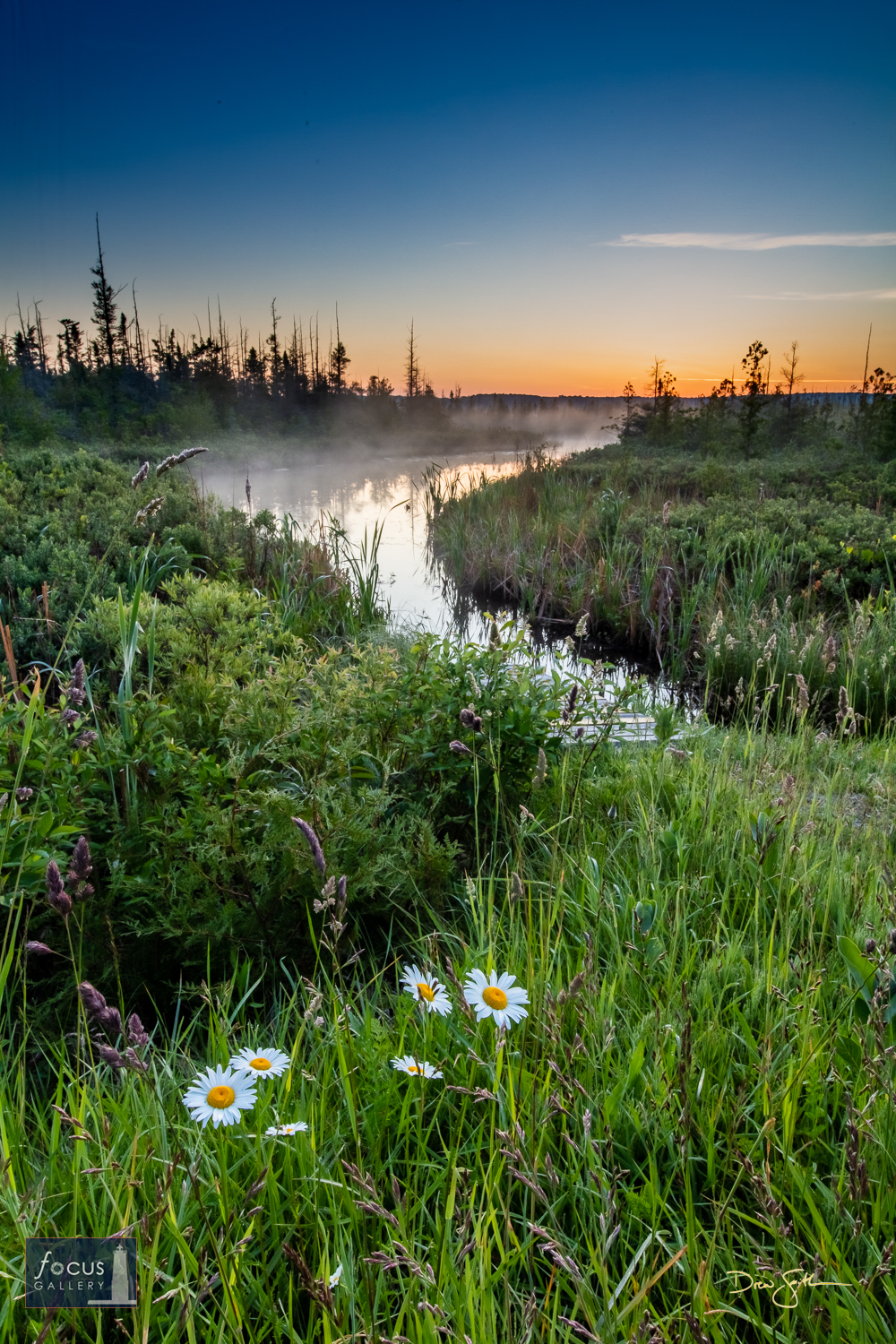 Photo © Drew Smith Daisies bloom and mist rises along the Platte River on Deadstream Road at dawn.