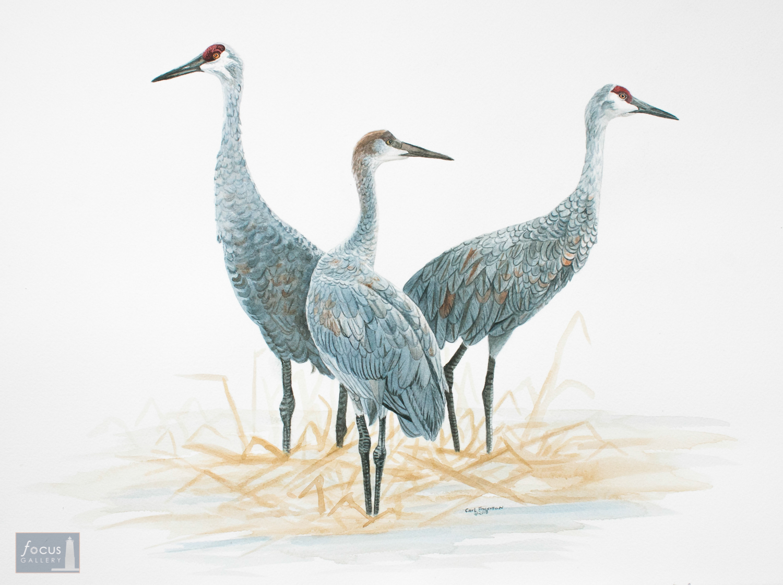 Original watercolor painting of a Sandhill Crane family.
