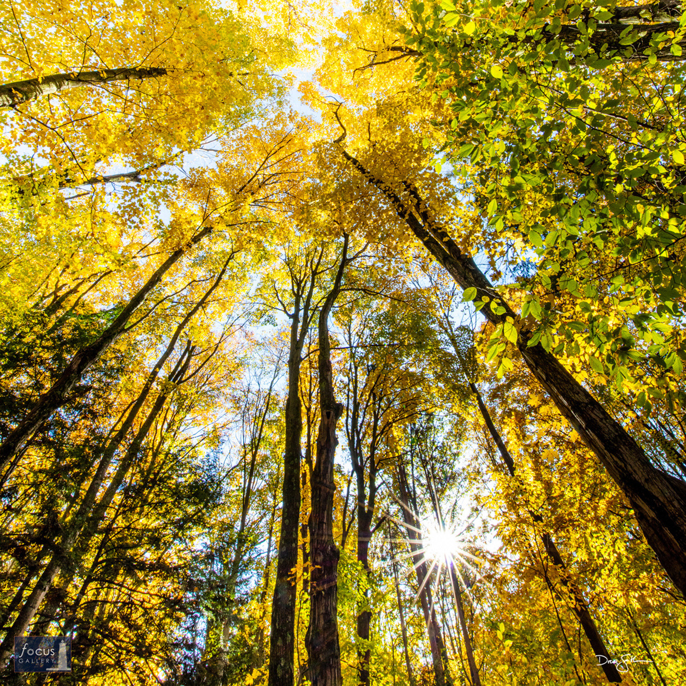 Photo © Drew Smith The sun pokes through the forest canopy on a beautiful autumn day in the North Woods.  This image was taken...
