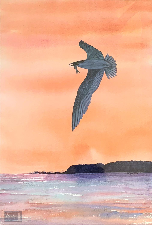 Original watercolor painting of a Caspian Tern bird flying over Lake Michigan in Leelanau County with a fish in its beak.