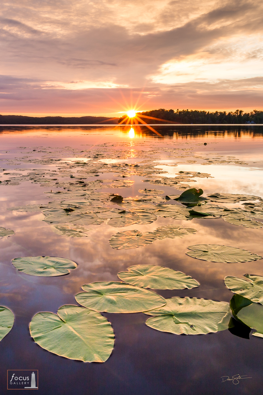 Sunset over Little Platte Lake lily pads, Benzie County, Michigan.